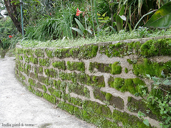 Garden Path at our Guest House in Gangtok, Sikkim - India pied-a-terre blog