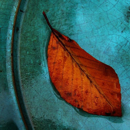 Rust Leaf on a Blue Platter
