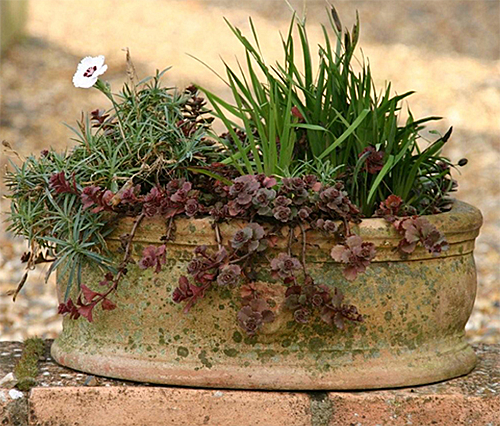 Patina-Pot-from-Italian-Terrace
