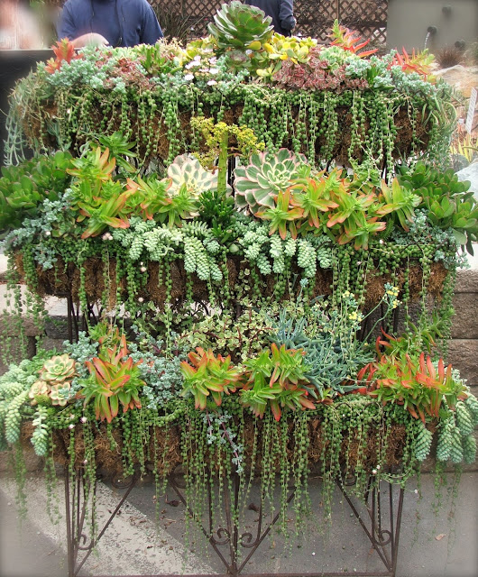 Succulent Wall Garden via Nadia Knows Gardens