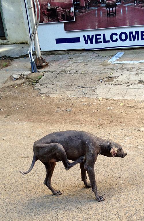 Mangy Street Dog