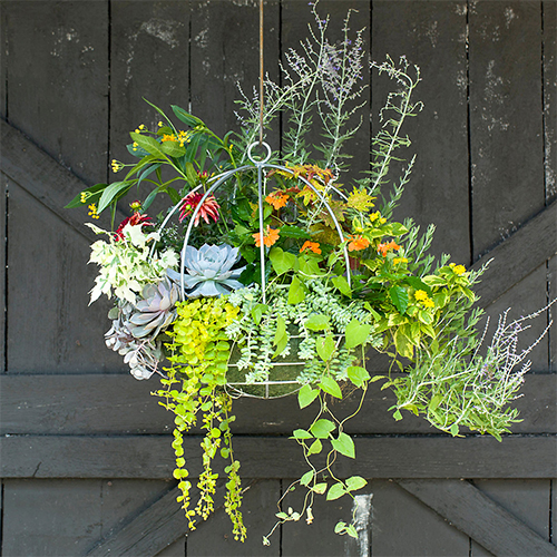 Terrain Hanging Globe Flower Arrangement