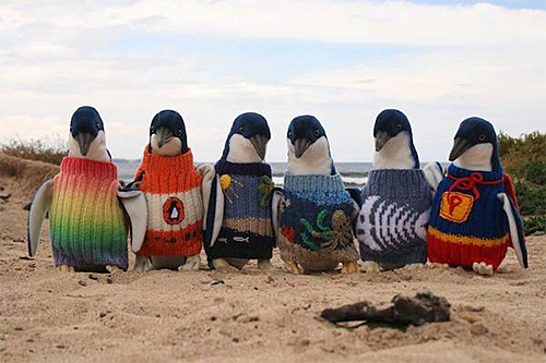 Penguins in Colorful Sweaters from the Penguin Foundation