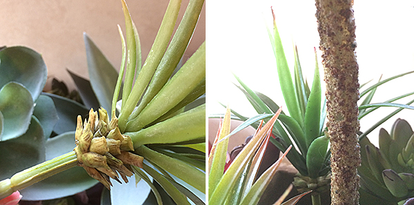 Faux Succulent Detail