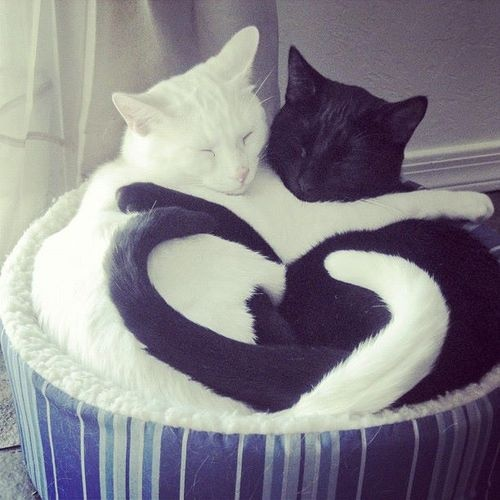 Cats Have a Heart