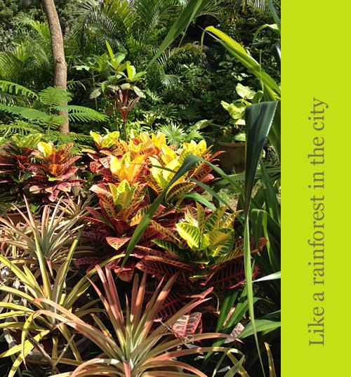 Amethyst-Garden-A-Rainforest-in-Chennai