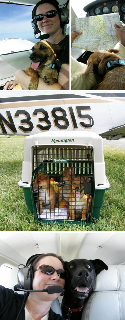 Pilots N Paws Pups