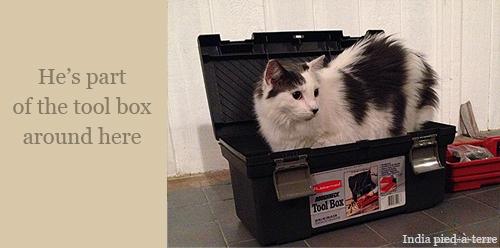 Chaai the Crafty Cat