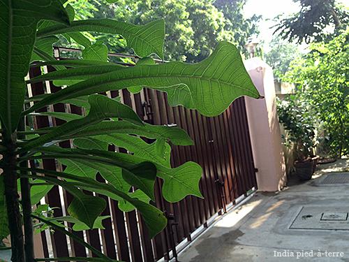 Cool Chennai Leaves