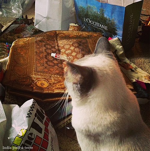 Seesa the Siamese Cat Surveying Stuff to Pack