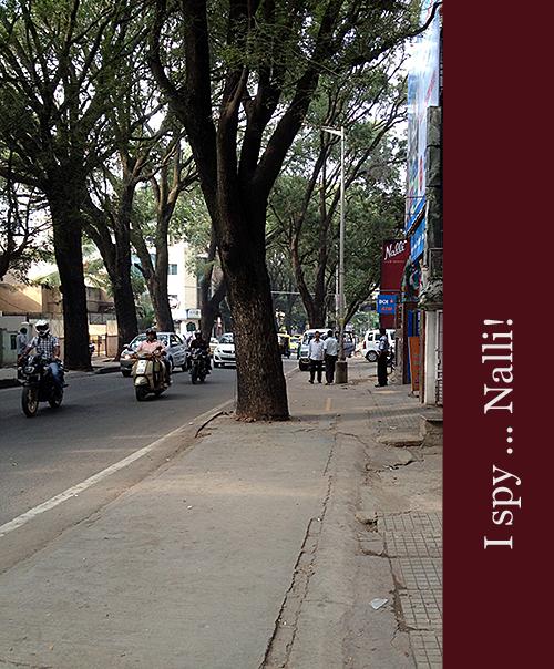 Nalli in Malleswaram Bengaluru