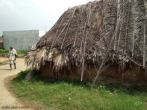 Palm Leaf Roof