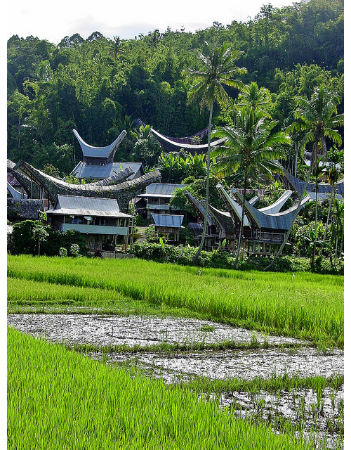 Toraja Village in Sulawesi photo by Peter Connolly